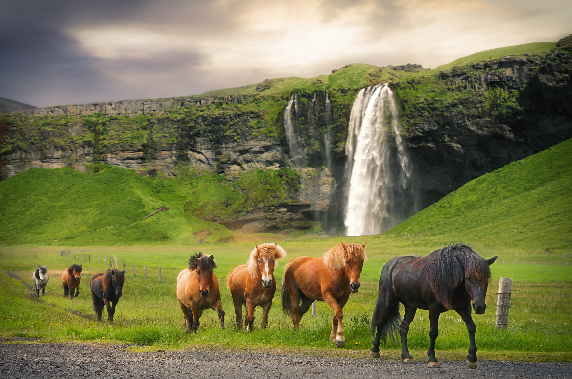 Horses in volcanic landscape, Iceland