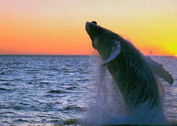 Whale watching and sunset, Iceland