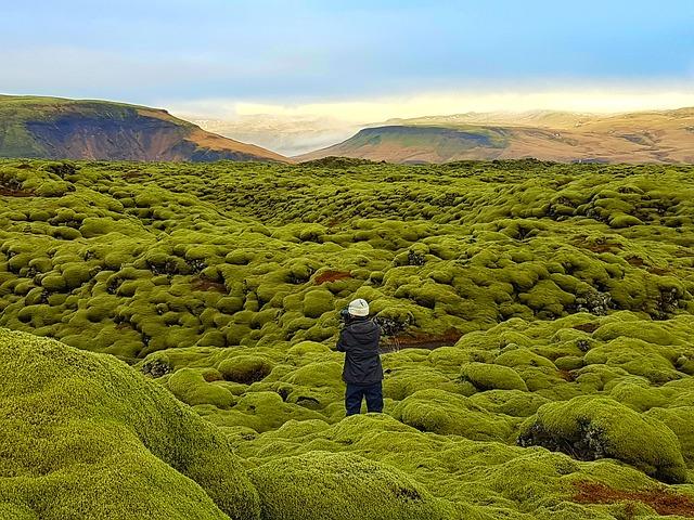 Moss field, Iceland
